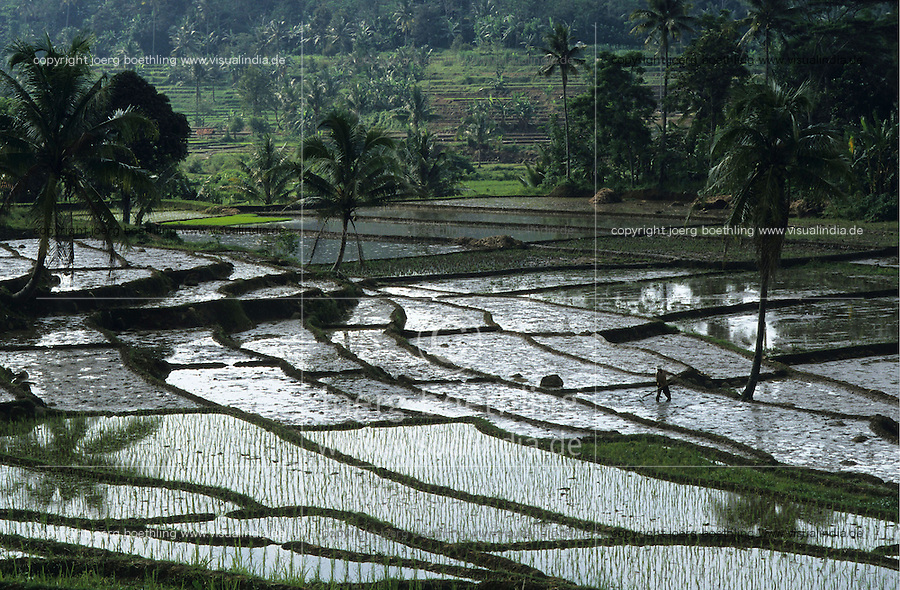 INDONESIA Java, rice terrace, rice plants in irrigated paddy field / INDONESIEN Java, Reisterrasse, Felder mit Reissetzlingen