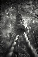 Hangman's noose
