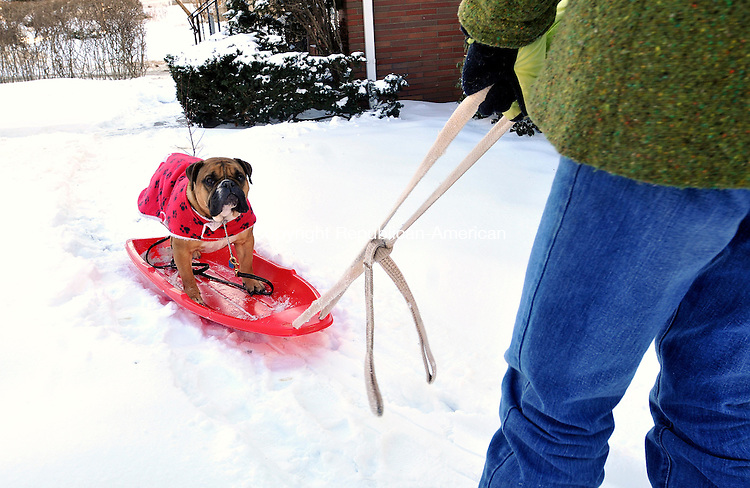 WATERBURY, CT- 11 JANUARY 2008 --011109JS02-Marjorie Czarsty of Waterbury, pulls her dog Timothy, a 4 year old English Bulldog, around their Cooke Street home on a sled on Sunday. Czarsty said Timothy loves riding the sled as she pulls him through the neighborhood and has recently purchased a skateboard for him. They practice everyday in the kitchen of the house. <br /> Jim Shannon / Republican-American