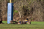 Vernon Comely dives over to score his second try during the Counties Manukau Premier Club Rugby game between Patumahoe & Karaka played at Patumahoe on Saturday June 13th 2009. Patumahoe lead 8 - 0 at halftime and went on to win 20 - 0.