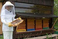 Mädchen, KInd in Imkerkleidung kontrolliert Bienen, Honigbiene, Bienen, Imkerei, Imker hält Waben, Honig-Biene, Biene, Bienenvolk, Apis mellifera, Apis mellifica, honey bee, hive bee