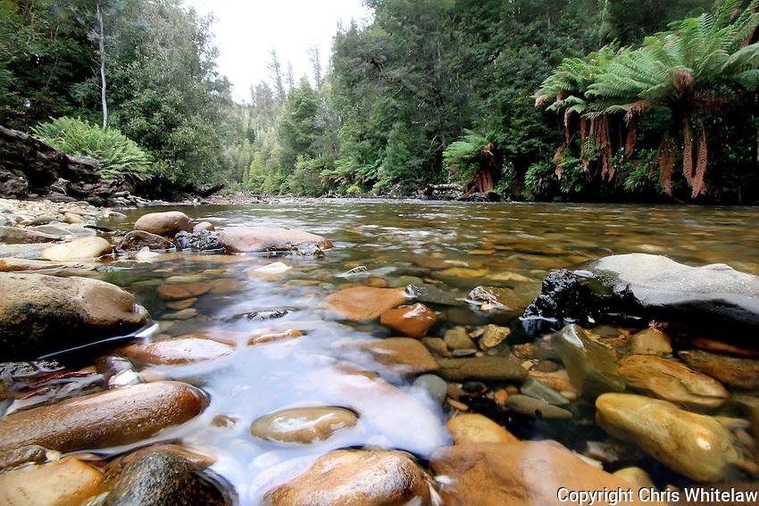 23_The Styx River #3, Tasmania