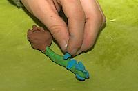Kinder basteln Frühjahrsblumen aus Knete, Bastelei, Kind klebt Blüten an Hyazinthe