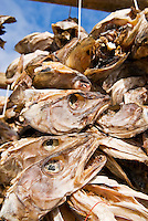 Cod stockfish hanging on wooden drying racks, called flakes, during winter, Lofoten islands, Norway.