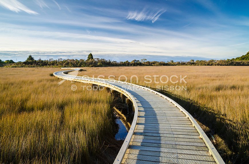 Curving boardwalk through wetland at Okarito, South Westland, New Zealand