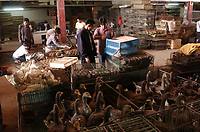 """Geese, ducks and wild birds are stacked in cages for sale at Lo Chun Wai (wild Animal Food) Market on the outskirts of Guangzhou, Guangdong Province, South China in this file photo. China's wild animal markets, where live wild animals and reared animals are sold are the source of many viruses that mutate as they """"jump"""" from animals to humans. The coronavirus COVID-19 is thought to have originated in an animal market in China. <br /> By Sinopix Photo Agency"""