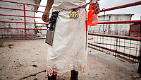 A slaughterer stands in a cattle pen in a small family owned slaughter and meat packing company in Mead, Kansas. At this firm they typically slaughter ten animals each day but is one of only a few such sized companies in a region dominated by four giant meat packing plants that kill and process between five and six thousand cattle a day.