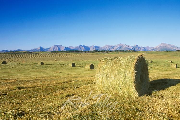 Hay Harvest, Pincher Creek, Alberta, Canada