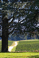 A view over the garden and vineyard with an enormous cedar tree - Château Pey la Tour, previously Clos de la Tour or de Latour, Bordeaux, France