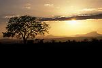 Sunset at Mikumi. Mikumi National Park, Tanzania