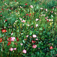 Cosmos cacophony swells your spirits on a bright summer's day in the praire. Sweeps of varied colors move gentlly in breeze. Enjoy the feeling.<br />