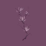 Elegant tree branch of pink magnolia flowers blossom Japanese Zen painting based artistic design illustration isolated on dark dusty faded purple background