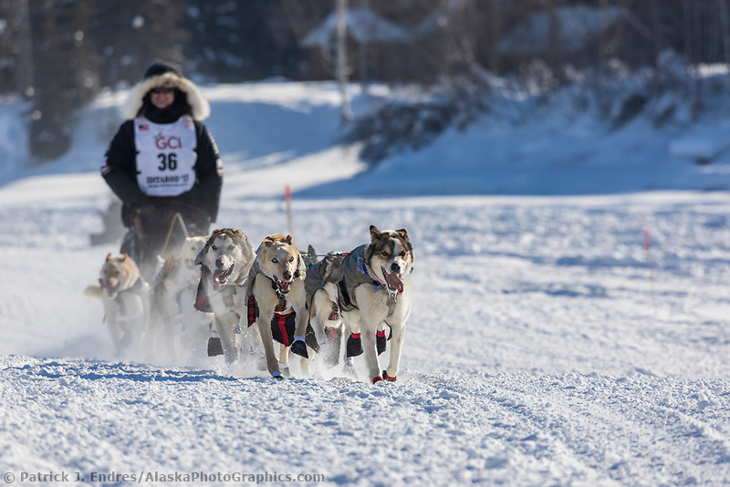 2017 Iditarod sled dog race restart in Fairbanks, Alaska.