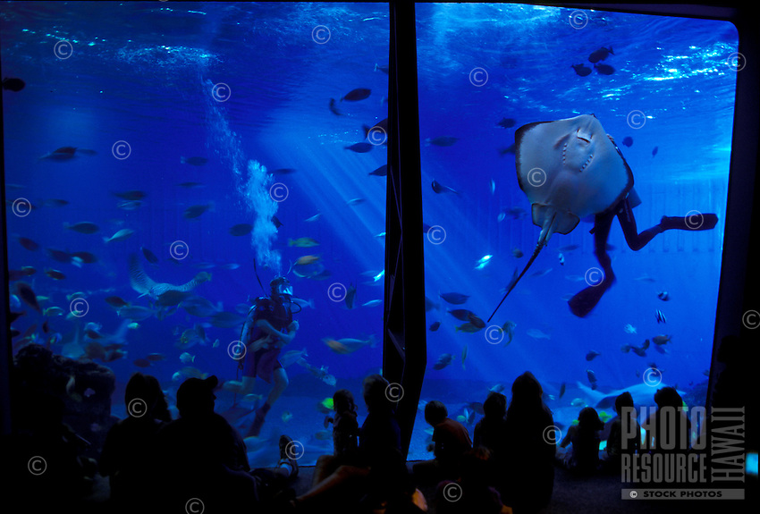 Children and adults watch as scuba divers swim with stingrays, sharks and other fish at Maui Ocean Center, Maalaea, Maui