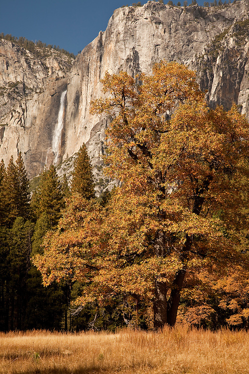 The last of October brings fall colors to Yosemite Valley in Yosemite National Park.