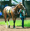 Satan's Mistress before The Dashing Beauty Stakes at Delaware Park on 7/11/15