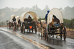 Days of '49 wagon train as they travel Amador County's Shenandoah Valley, Calif., in the rain.<br /> <br /> Diamond Jubilee commemoration of the founding of Amador County in 1854