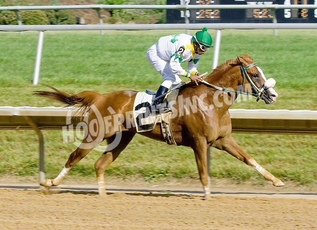 Spin Doctor winning at Delaware Park on 6/13/12