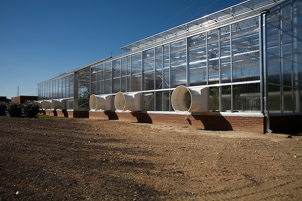 October 12, 2007, Raleigh, NC..Greenhouses at the Department of Forest Biotechnology at North Carolina State University are being used to grow trees with lower lignin levels to be better used for future bio-fuel technologies.
