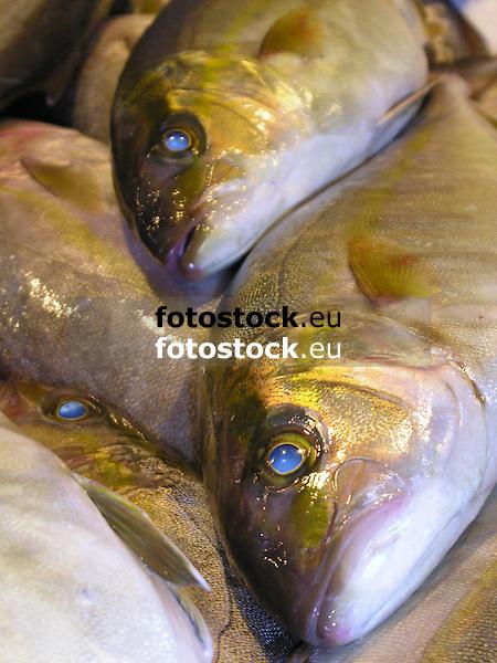 Fish | Pescado | Fisch<br /> <br /> 1600 x 1200 px<br /> 150 dpi: 27,09 x 20,32 cm<br /> 300 dpi: 13,55 x 10,16 cm