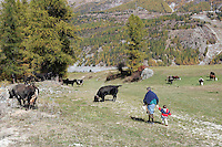 Un paesaggio nel Parco Nazionale del Gran Paradiso in Val d'Aosta.<br /> Scenic landscape with cattle at the Gran Paradiso National Park, Aosta Valley.<br /> UPDATE IMAGES PRESS/Riccardo De Luca