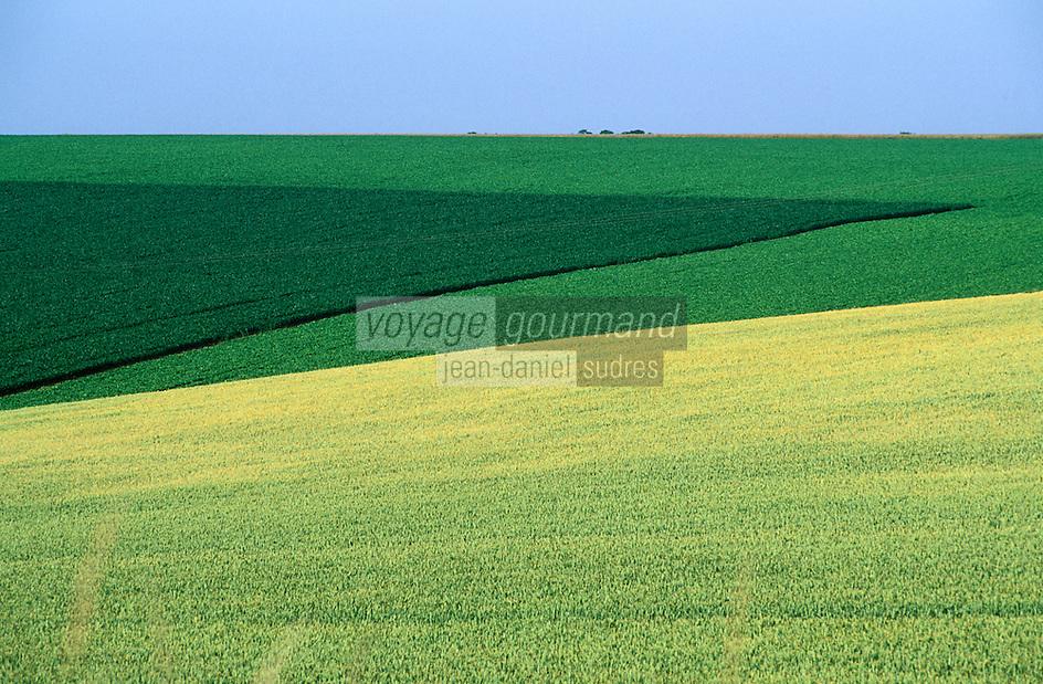 Europe/France/Ile-de-France/77/Seine-et-Marne/Env de Jouarre: Paysage agricole de la Brie