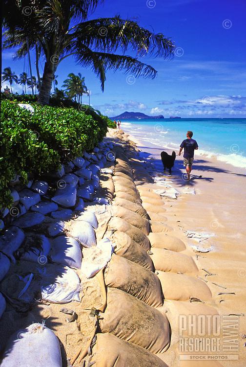 Giant sand bags line a portion of Lanikai Beach in Kailua (windward Oahu area) to help slow the increasing problem of coastal erosion on Oahu.