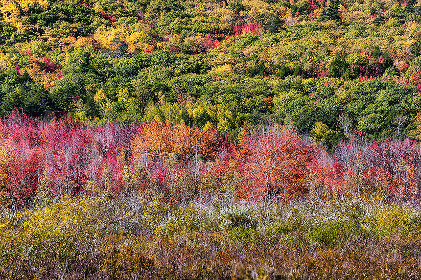 Autumn color, Acadia National Park, Mt Desert Island, Maine, USA