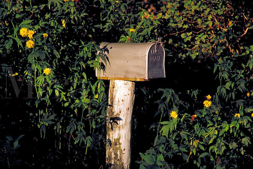 Rural mailbox.<br />