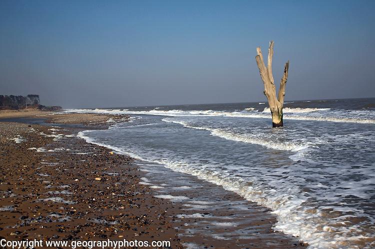 Single dead tree standing in the sea symbolic of sea level rise and erosion, Benacre, Suffolk, England