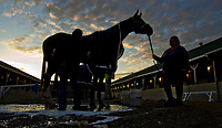 LOUISVILLE, KENTUCKY - MAY 03: A horse gets a bath at sunrise during Kentucky Derby and Oaks preparations at Churchill Downs on May 3, 2017 in Louisville, Kentucky. (Photo by Sydney Serio/Eclipse Sportswire/Getty Images)
