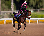 OCT 27: Daughter of Breeders Cup Champion Zenyatta, Zelda gallops at Santa Anita Park in Arcadia, California on Oct 27, 2019. Evers/Eclipse Sportswire/Breeders' Cup