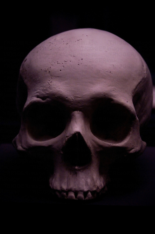 A skull dramatically lit from above