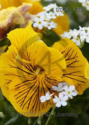 Gisela, FLOWERS, art, photos(DTGK439,#F#) Blumen, flores, retrato