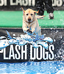 Kristine Catron, of Reno, and Kimber participate in the Splash Dogs dock diving competition at the Pet Wellness and Adoption Festival Saturday, May 28, 2011, in Reno, Nev. .Photo by Cathleen Allison