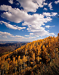 Autumn on Beartrap Ridge, Mt. Nebo, Wasatch Mountains