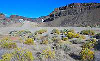 Frenchman Coulee landscape: flowering Rabbitbrush in sand dunes climbing against ancient volcanic basalt cliffs in Washington State.