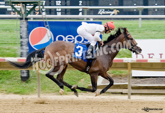 Lily's Peak winning at Delaware Park on 8/30/14