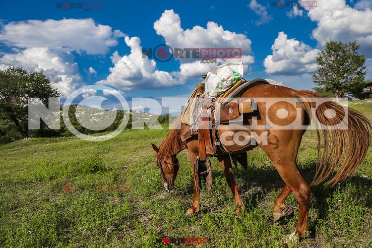 A horse with a horse grazes in the field for a day. Landscape of clouds and blue sky at Rancho el Llano, Sierra Los Locos, municipality of San Felipe de Jesús, Sonora, Mexico and Aconchi Sonora, during the Madrean Discovery Expedition (MDE) of the GreaterGood.org MDE organization.<br /> (Photo: Luisgutierrez / NortePhoto.com)<br /> <br /> un caballo con montura pasta en el campo durante un dia. Paisaje de nubes y cielo azul en el Rancho el Llano, Sierra Los Locos, municipio de San Felipe de Jesús, Sonora, México y Aconchi Sonora, durante las Expedición Madrean Discovery (MDE) de la organización GreaterGood.org MDE.<br /> (Photo:Luisgutierrez/NortePhoto.com)