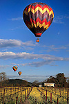 Hot air balloons sail over Napa Valley filled in mustard fields.