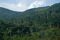 Lush forest between Soroa and Las Terrazas, Cuba.