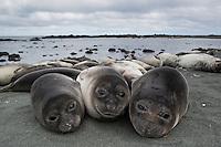 2014 December - Sub Antarctic Islands