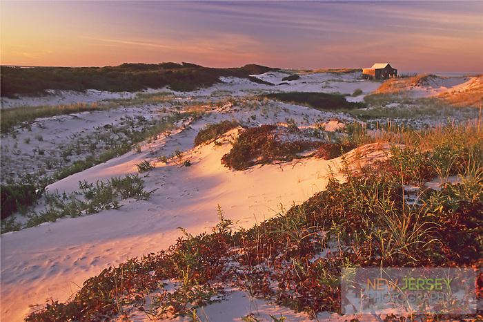 Coastal Sand Dunes, Secondary dunes and abandoned shack, Island Beach, New Jersey
