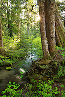 Still Creek flowing through Mt Hood National Forest, Oregon