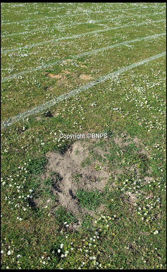 BNPS.co.uk (01202 558833)<br /> Pic: PhilYeomans/BNPS<br /> <br /> Cranborne Middle School playing field which has been blighted by bunnies.<br /> <br /> Bunny spoiler...<br /> <br /> A school has been forced to cancel its sports day and ban children from its playing field after its attempts to control a plague of rabbits failed.<br /> <br /> Cranborne Middle School got in a stew after the bothersome bunnies dug countless holes in the school playing field, with children tripping in the holes and hurting themselves.<br /> <br /> Staff at the school in Dorset have worked with a landscaping company and gamekeepers from the Cranborne Estate to cull the colony using ferrets, gas and shooting in recent years, but say this year the rampant rabbits have multiplied more than ever.