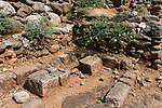 A caper bush growing among the ruins of the Old Testament city of Dan in the Tel Dan Nature Reserve in Galilee in northern Israel.