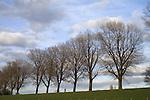 Europa, DEU, Deutschland, Nordrhein Westfalen, NRW, Niederrhein, Rheinland, Duesseldorf, Kaiserswerth, Naturschutzgebiet Rheinaue, Baeume, Rheindeich, Radfahrer, Fahrradfahrer, Kategorien und Themen, Natur, Umwelt, Landschaft, Jahreszeiten, Stimmungen, Landschaftsfotografie, Landschaften, Landschaftsphoto, Landschaftsphotographie, Naturschutz, Naturschutzgebiete, Landschaftsschutz, Biotop, Biotope, Landschaftsschutzgebiete, Landschaftsschutzgebiet, Oekologie, Oekologisch, Typisch, Landschaftstypisch, Landschaftspflege......[Fuer die Nutzung gelten die jeweils gueltigen Allgemeinen Liefer-und Geschaeftsbedingungen. Nutzung nur gegen Verwendungsmeldung und Nachweis. Download der AGB unter http://www.image-box.com oder werden auf Anfrage zugesendet. Freigabe ist vorher erforderlich. Jede Nutzung des Fotos ist honorarpflichtig gemaess derzeit gueltiger MFM Liste - Kontakt, Uwe Schmid-Fotografie, Duisburg, Tel. (+49).2065.677997, schmid.uwe@onlinehome.de, www.image-box.com]
