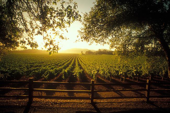 Sunrise appears over an Oakville vineyard