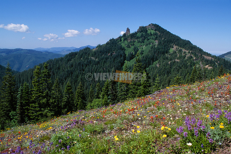 Wildflowers at Cone Peak meadow with Iron Mountain in background; Willamette National Forest, Cascade Mountains, Oregon.