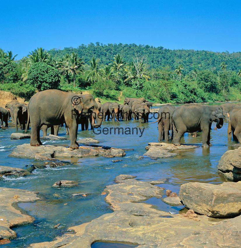 Sri Lanka, Pinnawala Elephant Orphanage near Kandy: Elephant Washing | Sri Lanka, Pinnawala bei Kandy im Landesinneren: Baden im Elefantenwaisenhaus